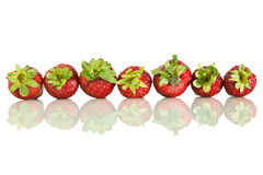 Strawberries laid in a row. Strawberries ripe laid in a row and it's reflection on white isolated background Stock Images