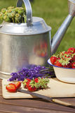 Strawberries, lavender and poppy capsules Stock Photography