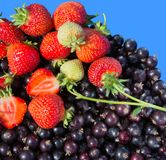 Strawberries with leaf and currant black. Fresh strawberries and. Strawberries with leaf and currant black. Mix of fresh strawberries and black currants Royalty Free Stock Photos
