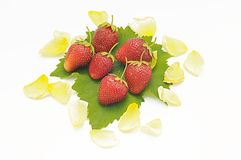 Strawberries on leaf and rose petals Stock Photography