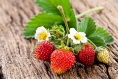 Strawberries with leaves Royalty Free Stock Image