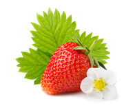 Strawberries with leaves and blossom isolated on a white Royalty Free Stock Photography