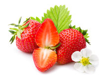 Strawberries with leaves and blossom. Isolated on a white Royalty Free Stock Photography