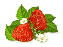 Strawberries with leaves and blossoms Royalty Free Stock Photo