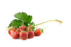 Strawberries with leaves.close up Isolated on a white background. Stock Photos