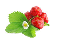 Strawberries with leaves and flower Stock Photo