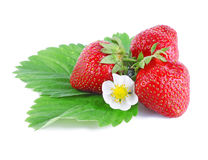 Strawberries with leaves and flower Stock Image