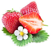 Strawberries with leaves and flower  on a white. Stock Image