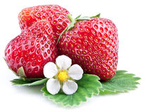 Strawberries with leaves isolated on a white. Royalty Free Stock Images