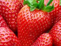 Strawberries leaves macro shot. Strawberries with leaves macro shot royalty free stock photos