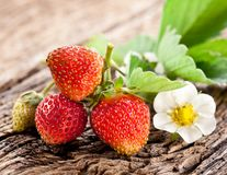 Strawberries with leaves Stock Photo