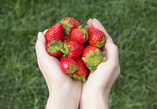 Free Strawberries Lies In The Hands On A Background Of Grass Royalty Free Stock Images - 41206439