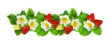 Strawberries line arrangement with flowers, berries and leaves. Isolated on white. Set Stock Photos