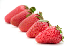 Strawberries lined up Royalty Free Stock Photography