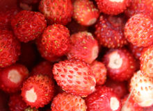 Strawberries. A lot of  wild strawberries Royalty Free Stock Image