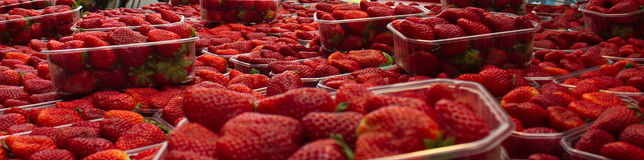 Strawberries. Lots of strawberries in one place Royalty Free Stock Photo