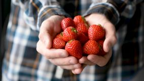 Strawberries in male hands