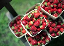 Strawberries at Market. These beautiful, red, ripe strawberries are piled high at a rural farmer's market Stock Image