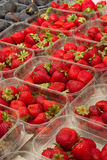 Strawberries at the market Royalty Free Stock Image