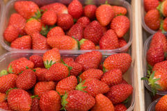 Strawberries at the Market Stock Image