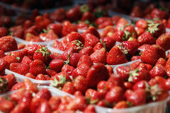 Strawberries on market Stock Image