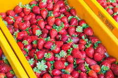 Strawberries on the market Stock Image