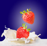 Strawberries & milk. Strawberries fall in milk on blue background Royalty Free Stock Photo