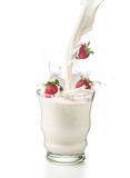 Strawberries with milk poured into a glass with splashes. Isolated on white background. Three strawberries falling into a glass splashing with milk Stock Images