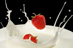 Strawberries with milk splash. Falling strawberries and milk splash stock photography