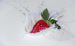 Strawberries with milk splash. Red strawberry falling into milk creating bryzgi.yogurt with vitamins Royalty Free Stock Photo