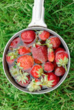 Strawberries in an old metal pot Stock Image