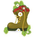 Strawberries old shoe and daisy flowers. Close-up vector illustration on white background Stock Photography