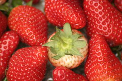 Strawberries and one green top Stock Images