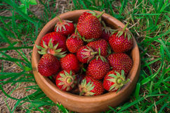 Strawberries. Organic Berries Closeup. Ripe Strawberry In The Fr Royalty Free Stock Photos
