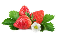 Strawberries organic strawberry with green leaf on white Royalty Free Stock Photo