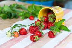 Strawberries. Out of a cup Stock Images