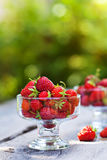 Strawberries outdoor Royalty Free Stock Photography