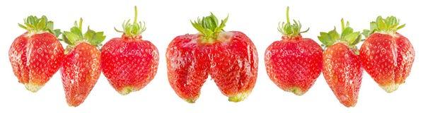 Strawberries Panoramic Banner. Stock Photography