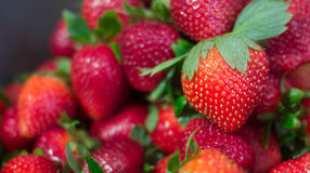 Strawberries. A photo of strawberries that can be used for commercial purposes or as a wallpaper Royalty Free Stock Photography