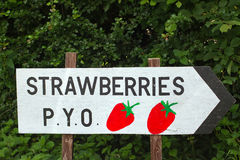 Strawberries pick your own wooden sign. With bushes behind Royalty Free Stock Images