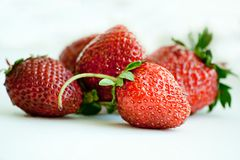 Strawberries plant with green leaves on white back Stock Images