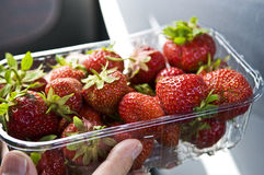 Strawberries in Plastic Container Stock Photo