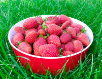 Strawberries on plate Royalty Free Stock Photos