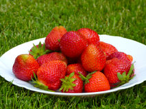 Strawberries. Plate full of fresh strawberries on the green lawn Stock Image