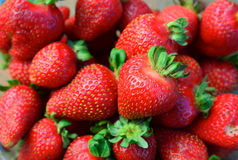 Strawberries. Plucked straight from orchard stock image