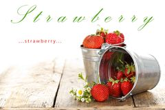 Strawberries in pots Stock Photos