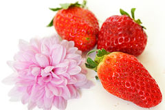 Strawberries and purple chrysanthemum Royalty Free Stock Photography