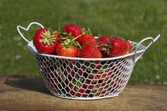 Strawberries or Raspberries cantaloupe lat. Fragária moschátaa. Stock Images