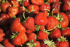 Strawberries. Red strawberries reflect evening sun Stock Photography
