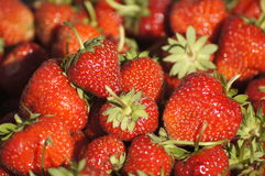Strawberries. Red strawberries reflect evening sun Royalty Free Stock Image
